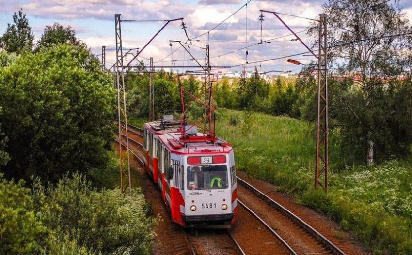 трамвай №36 Стрельна
