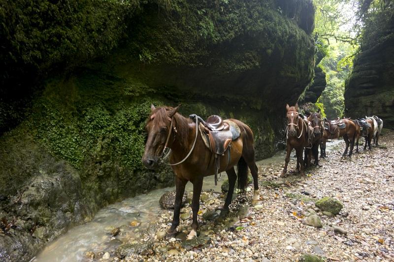 Конные прогулки Абхазии
