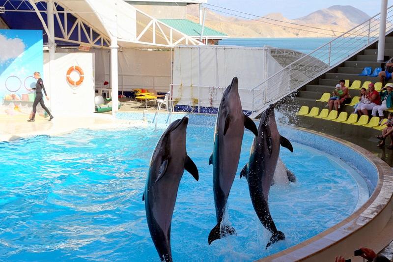 Дельфинарий в Коктебеле