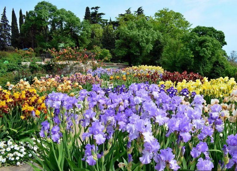 Никитский ботанический сад Ялта