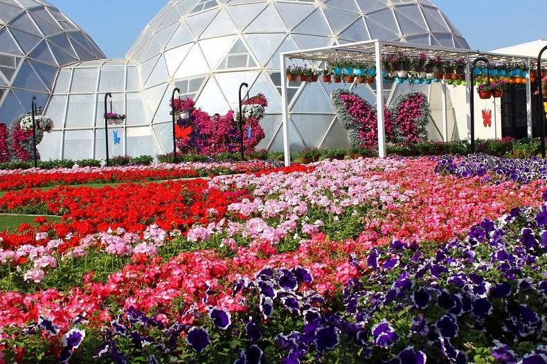 Сад бабочек Дубай